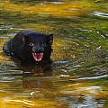 Tasmanian Devil by Harry Spitz