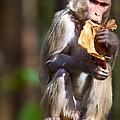 Tasty Leaf by David Beebe