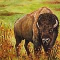 Tatanka, Buffalo  by Sandra Reeves