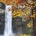 Taughannock Falls And Maple by Michele Steffey