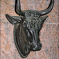 Taurus The Bull by Bill Cannon