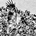 Tawny Eagle Flighing Away by Perla Copernik