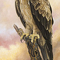 Tawny Eagle by Lucie Bilodeau
