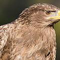 Tawny Eagle Portrait by Chris Smith