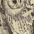 Tawny Owl by Unknown