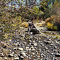 Taylor Creek Lake Tahoe by Marcy Wagman