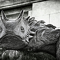 Tcu Horned Frog 2014 by Joan Carroll