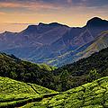 Tea Plantations Near Kodaikanal by Photograph By Jonah Murphy