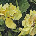 Tea Rose by Natasha Denger