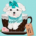 Teacup Baby Maltese by Margaret Newcomb