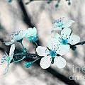 Teal Blossoms by Debra Thompson