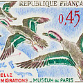 Teal Study Of Migration-museum Of Paris by Jeelan Clark