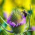 Teasel And Bee by Steve Harrington