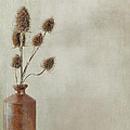 Teasels In Stone Jar by Jacqueline Moore