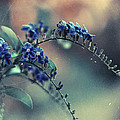 Technicolor Flowers by Zapista Zapista