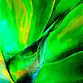 Technicolor Succulent by Elaine Plesser