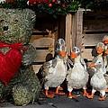 Teddy Bear With Flock Of Stuffed Ducks by Imran Ahmed