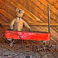 Teddy Takes A Ride by Sylvia Thornton