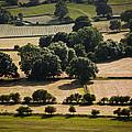 Teesdale Summer by Geoff Evans