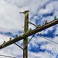 Telegraph Pole - Yesterdays Technology by Paul Ward