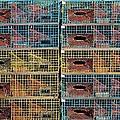 Ten Lobster Traps by Stuart Litoff