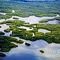 Ten Thousand Islands 2  by Tracy Knauer