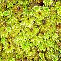 Tender Fresh Green Moss Background Texture Pattern by Stephan Pietzko
