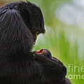 Tender Moments by Ashley Vincent
