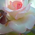 Tenderness by Deb Halloran