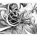 Tendrils In Pencil 02 by Amanda Moore