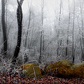 Tennessee Mountain Frost by Michael Eingle