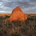 Termite Mound, Exmouth Western by Science Photo Library