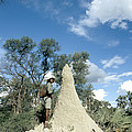 Termite Mound by Mark Newman