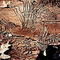 Termite Trails by Kevin Grant