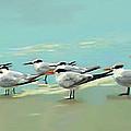 Tern Tern Tern by Deborah Boyd