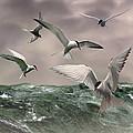 Terns Feasting At Sea by IM Spadecaller