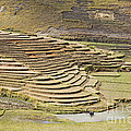 Terraces And Paddy Fields by Liz Leyden