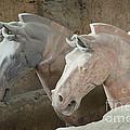 Terracotta Warrior Horses, China by John Shaw