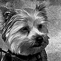 Terrier - Dog - Playing With Light by Liane Wright