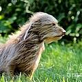 Terrier In The Wind by Janice Byer
