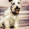 Terrier On Deck by Jon Cody