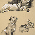 Terriers, 1930, Illustrations by Cecil Charles Windsor Aldin