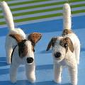 Terriers by Maria Joy
