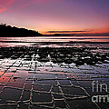 Tesselated Pavement Sunrise by Bill  Robinson