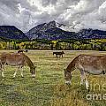 Teton Pastorale by Gary Holmes