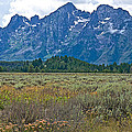 Teton Peaks And Flatland Near Jenny Lake In Grand Teton National Park-wyoming by Ruth Hager