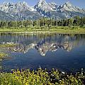4m9310-teton Range Reflection, Blacktail Pond, Wy by Ed  Cooper Photography