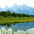 Teton Reflections by Catie Canetti