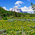 Teton Wildflowers by Greg Norrell