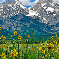 Tetons Peaks And Flowers Center Panel by Greg Norrell